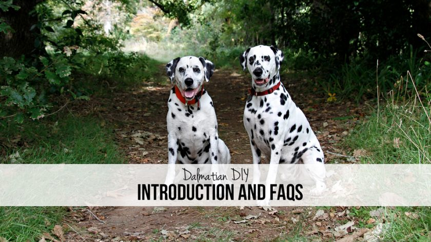 About the Dalmatian DIY Dog Blog Introduction and FAQs