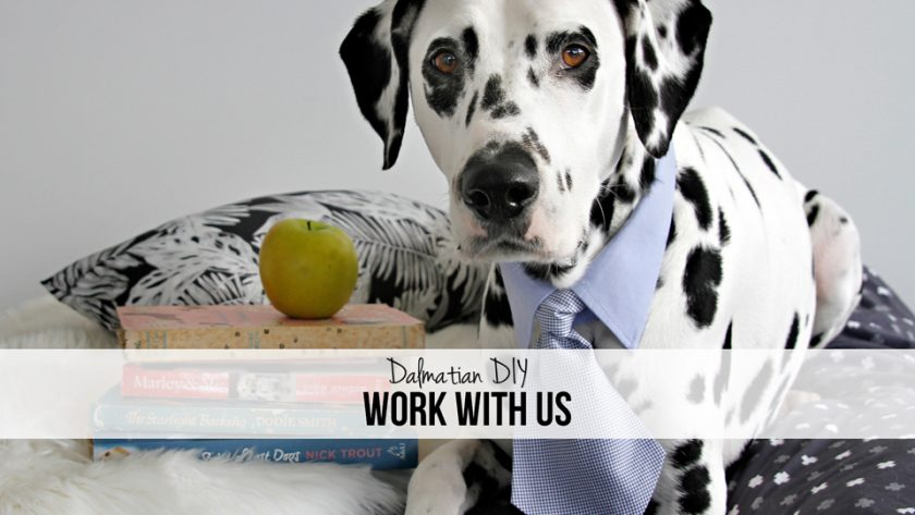 Dalmatian DIY Dog Blog Work and Collaborate with Us