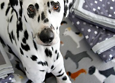 No Bake Banana and Carob Snowball Dog Treats