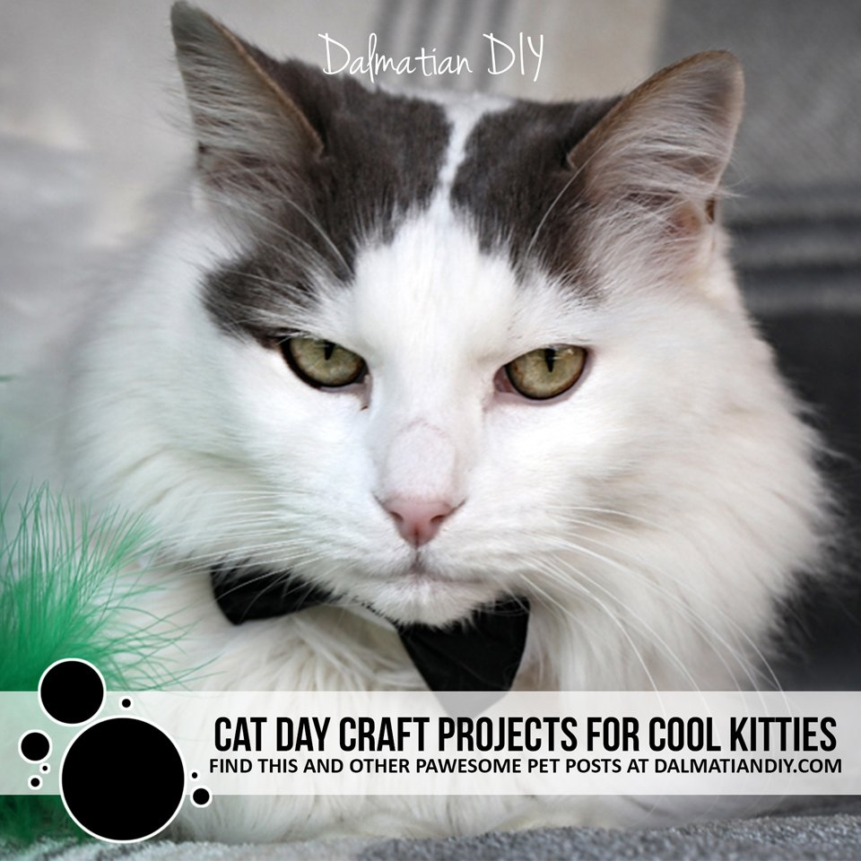 Cat Day crafts and creative ideas for cool kitties