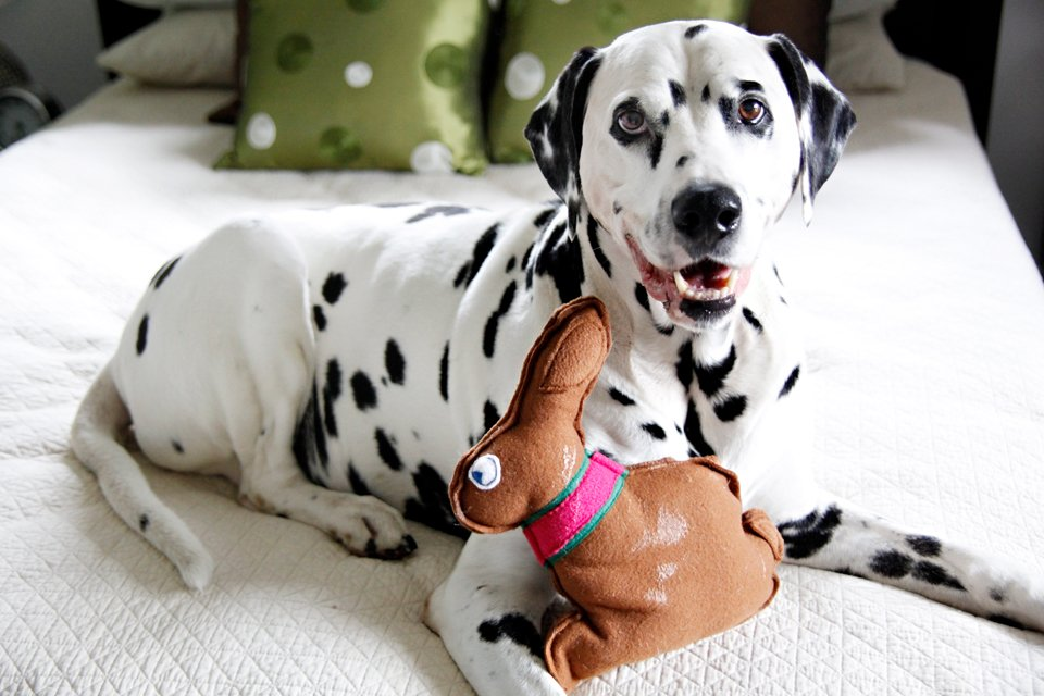 DIY easy sew Easter bunny stuffed squeaky dog toy