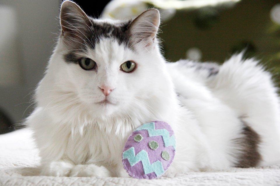 Fluffy white cat with homemade felt Easter egg toy