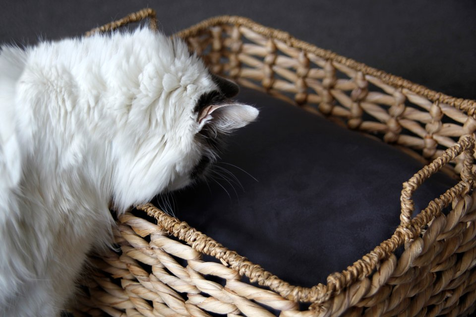 Cat looking at DIY rectangular basket cushion for pet bed
