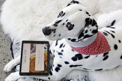 Dalmatian DIY dog blog website update