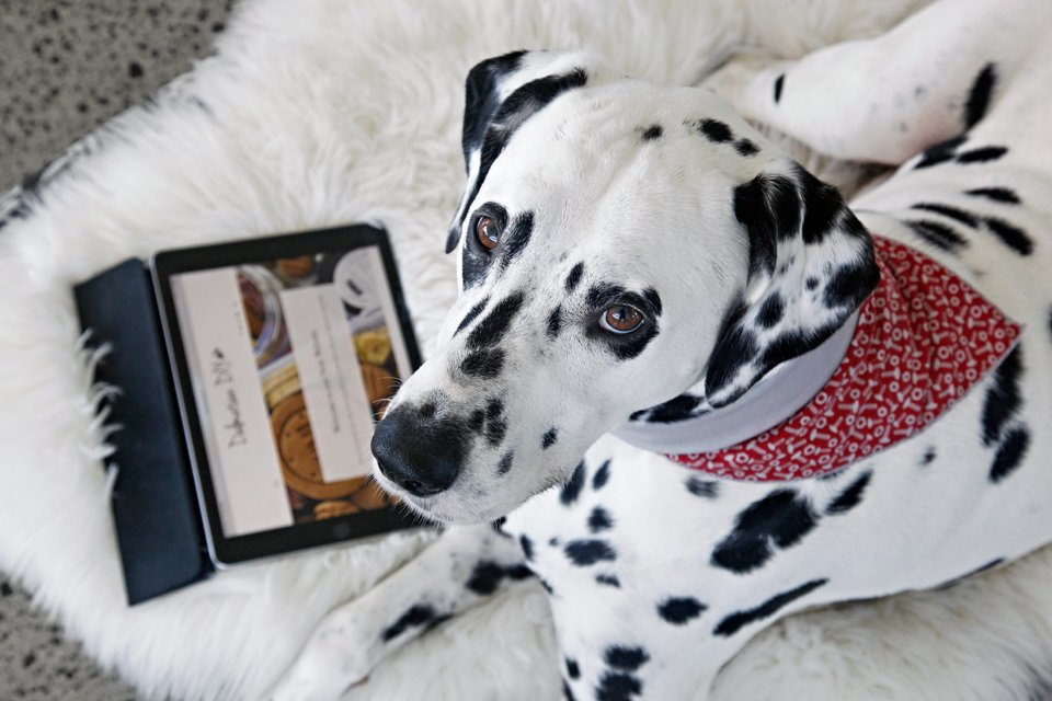 Dalmatian dog with an iPad on a fluffy dog bed