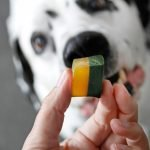 St. Patrick's Day green and gold layered gelatin gummy dog treat recipe