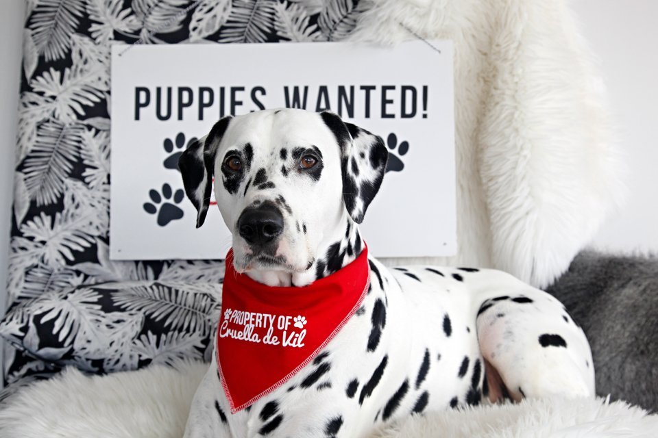 """DIY Cricut """"Property of Cruella de Vil"""" dog bandanas and """"Puppies Wanted"""" sign"""