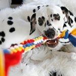 DIY colour block woven fleece dog tug toy