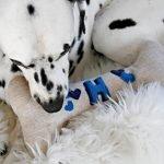 DIY monogrammed squeaky stuffed bone dog toy