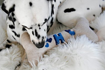 DIY monogrammed squeaky stuffed bone dog toy