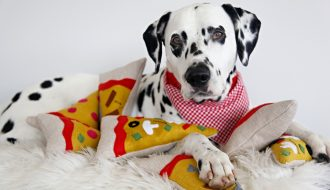 DIY squeaky stuffed pizza slice dog toys