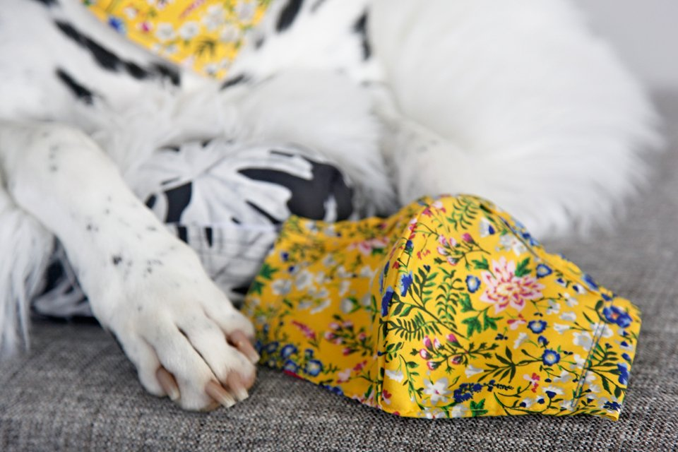 Making DIY fabric facemasks, matching dog accessories, and more