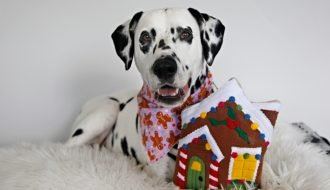 DIY gingerbread house Christmas dog toy