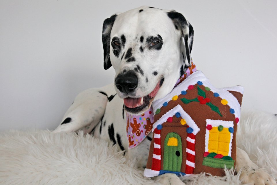 Smiling dalmatian dog with a homemade gingerbread house toy