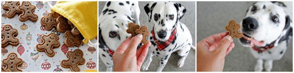 Dalmatian dogs eating homemade Christmas treats