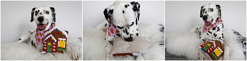 Dalmatian dog playing with a stuffed gingerbread house toy
