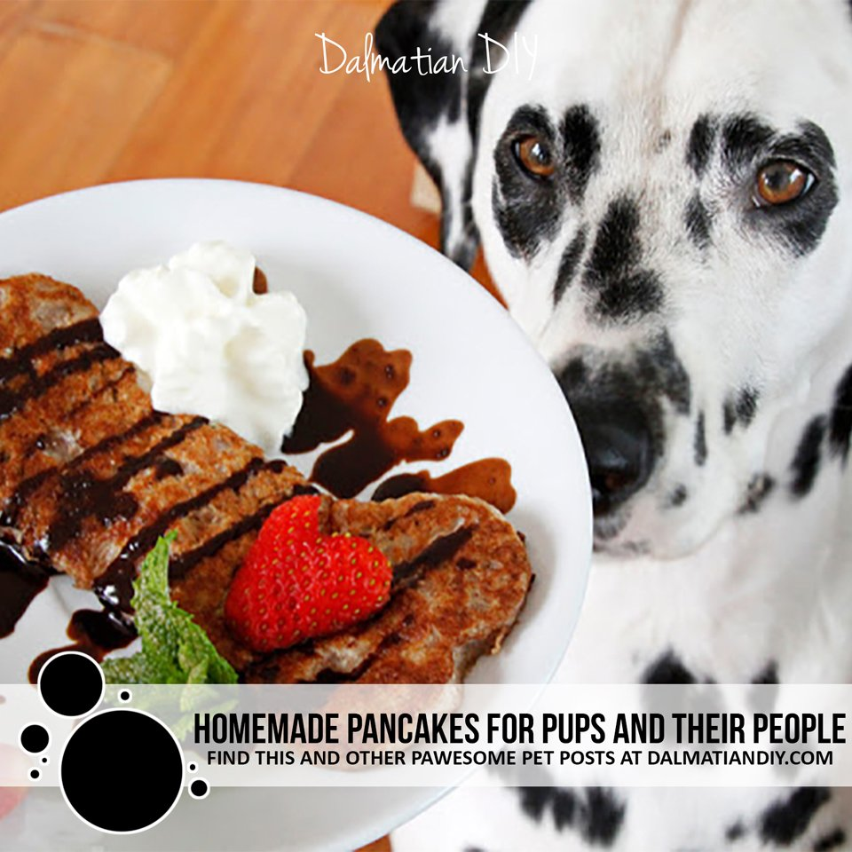 Tips for making pancakes recipes that people can share with their dogs