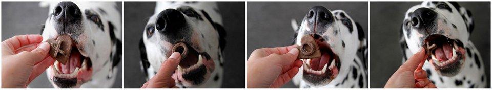 Dalmatian dogs eating homemade Valentine's Day XO dog treats
