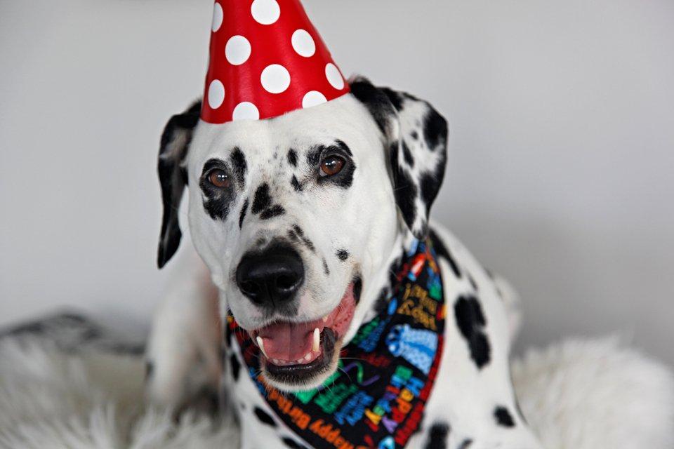 Smiling dog portrait from Humphrey's 7th birthday